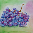 Foto Stock: Grape watercolor