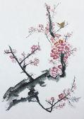 Plum tree blossom — Stock Photo