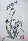 Wild asian flower — Stock Photo