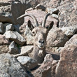 Mountain goat — Stock Photo #18233563