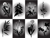 Vector illustration of different kind of plant — Stock Vector
