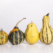 Growing Gourds — Stockfoto