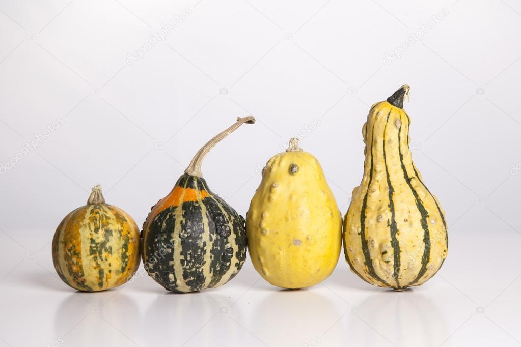 Four gourds stand in a row  on a white background from smallest to largest.   — Stock Photo #13120428