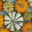 Small Varied Gourds — Stock Photo