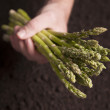 Hand holding Asparagus — Stock Photo