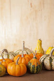 Group of Gourds — Stock Photo