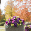 Stock Photo: Purple Tombstone Flowers in the Fall