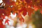 Krásné oranžové podzim listí — Stock fotografie