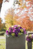 Sonbaharda mor mezar taşı çiçekler — Stok fotoğraf