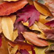 Colorful Fall Leaves — Stock Photo