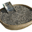 Stock Photo: Sunflower seed