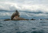Cormorants sitting on the rocks — Stock Photo