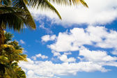 Blue sky with clouds and palm trees — Stock Photo