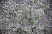 Soyut doku — Stok fotoğraf