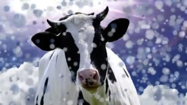 Happy Cow — Stock Video