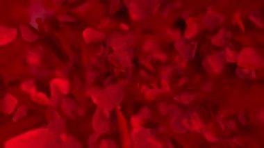 Hearts - bokeh — Stok video