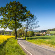 Spring in Germany — Stock Photo