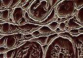 Vector illustration. natural skin textures — Stock Photo