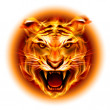 Head of fire tiger — Stock Vector #30778095