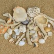 Shells and corals on the sand — Stockfoto