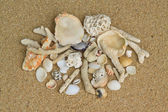 Shells and corals on the sand — Stock Photo