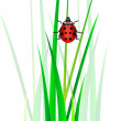 Vector ladybug in green grass — Stock Photo