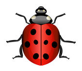 Vector ladybug — Stock Photo