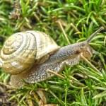 Snail. Macro closeup detail. — Stock Photo #34273611