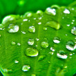 Water drops leaf — Stock Photo