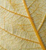 Closeup detail of leaf — Stock Photo