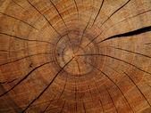 Wood texture detail — Stock Photo