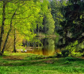 Landscape with pond — Stockfoto