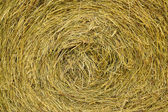 Golden hay background — Stock Photo