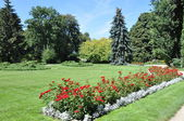 Garden and park, flower bed of roses — Stock Photo