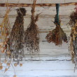 Stock Photo: Dried herbs hanging on wall