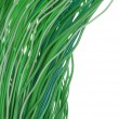 Bundles of green cables — Stock Photo