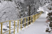 Snowy trail in the park — Stock Photo