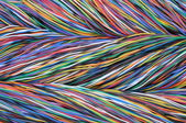 Colorful computer cables — Stock Photo