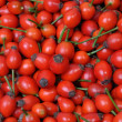 Rose hip fruits — Stock fotografie