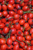Rose hip fruits — Stock Photo
