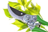 Garden pruner with green twigs — Stock fotografie