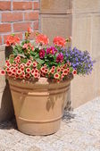 Flowers in the pot — Stock Photo