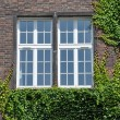 Wall with window wall covered by ivy — Stock Photo #49553421