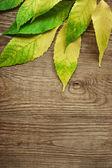 Autumn listowie na drewniane tła z kopia miejsce — Zdjęcie stockowe