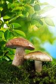 Грибы растут на замшелых земле крупным планом в осеннем лесу — Стоковое фото