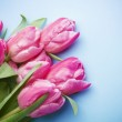 The pink tulips on a blue background — Stock Photo #22156819