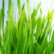 Grass — Stock Photo #22156869