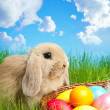 Little Easter bunny and Easter eggs on green grass — Stock Photo #22157141