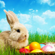 Little Easter bunny and Easter eggs on green grass — Stock Photo #22157151
