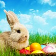 Little Easter bunny and Easter eggs on green grass — Stock Photo